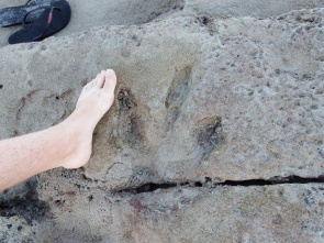 Fossilized Dinosaur Footprint