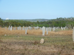 The magnetic termite mounds