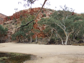 Ghost Gums at Ormiston Gorge