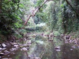 Danbulla NP - Mobo Creek Crater Walk
