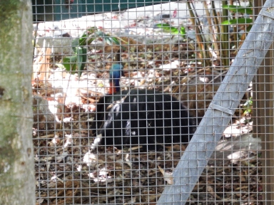 Cassowary exhibit was closed at time of our visit