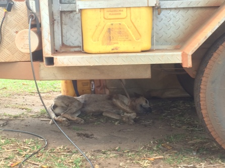 A stray dog found a cool spot under our camper trailer
