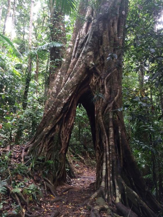 Rainforest walk to Eungella