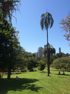 The Brisbane Botanical Gardens